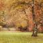 Zachte herfstkleuren