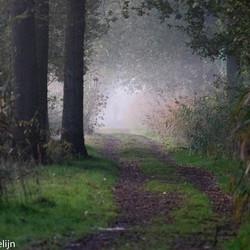 walk in toe the mist