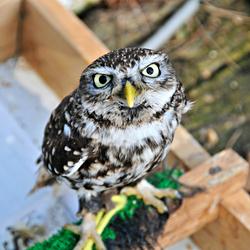Bezoek Roofvogelhof te Herselt