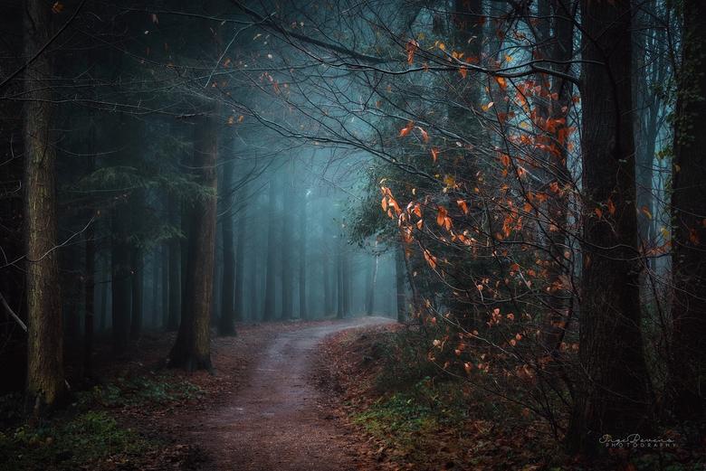 """Dark Days. - De donkere dagen voor kerst zijn aangebroken...met dit weekend: sneeuw! <img  src=""""/images/smileys/smile-big.png""""/>"""