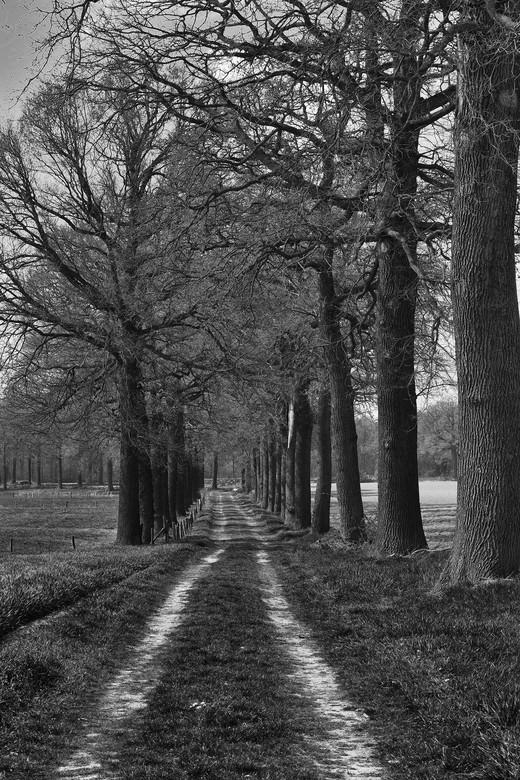 Landweg met bomen.  - Landweg met bomen, Midden-Limburg.