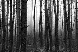 Door de bomen het bos niet