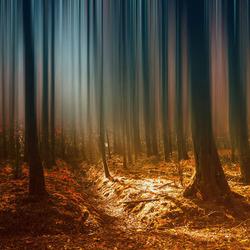 herfst 2013 Voorsterbos half blur