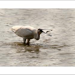 Natuur 05, Een visje opgooien...