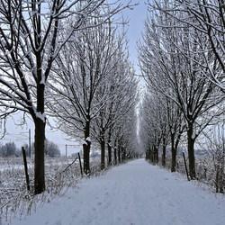 winter pracht 2010.