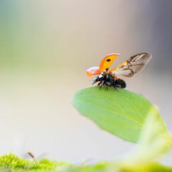 Fly, Ladybug Fly...