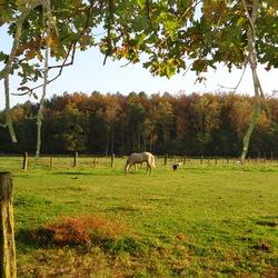 Brechtse heide (Vlaanderen)