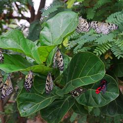 vlinder file