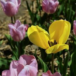 geel tussen paars