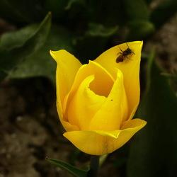 Geel staat voor vrolijkheid.