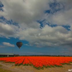 Bloemvelden Noord Holland