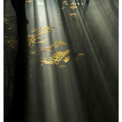 Dansend licht