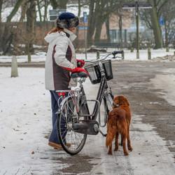 Vorige winter: Fietsen in de sneeuw