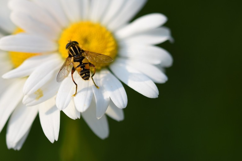 lucky wasp