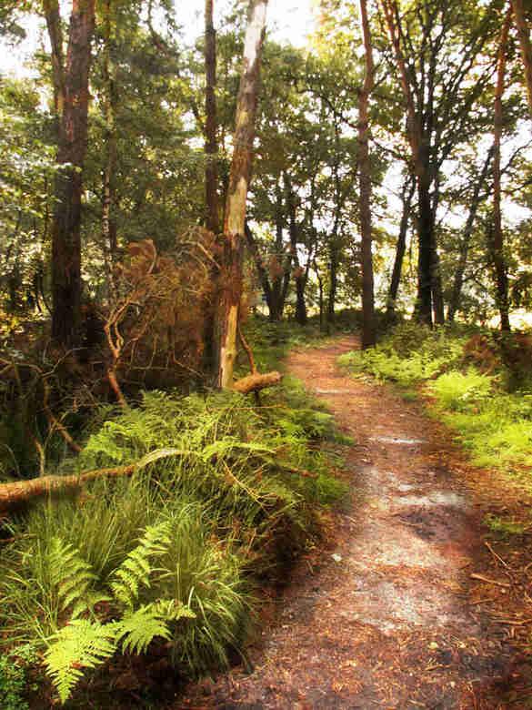 MystiFique Fairy Road - door het bos...<br /> gemaakt in de friezenberg, een redelijk mooi natuurgebied in de buurt van markelo.<br /> <br /> bewer