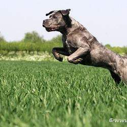 Mila jumpin'