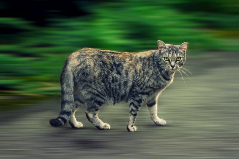 Curieuze kat - Bewerkt met Gimp 2.8 en Picasa 3.0