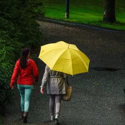 Bella Yella Umbrella...
