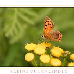 Het Vuurvlindertje