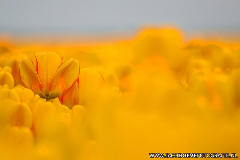 I Love Holland!  - Genomen op 12 april 2014.
