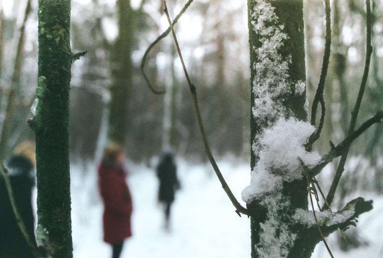 Sneeuwtak