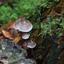 vlieg op paddenstoel