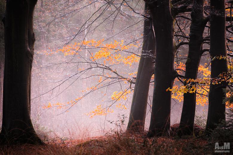 Mistige herfstochtend - Doordat de zon een kleine beetje begon te schijnen kregen de blaadjes net wat meer kleur en staken ze mooi af tegen te nevel o