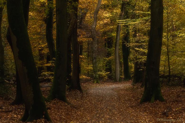 Herfst in het Speulderbos - Dank allemaal voor de fijne reacties bij mijn vorige opname. Elk jaar is het een feestje om in het Speulderbos rond te str