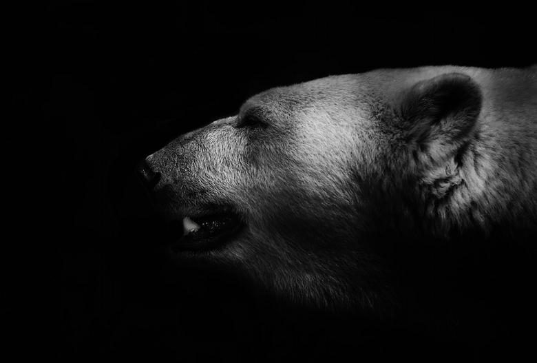 Creatures of the dark - Deze ijsbeer zat achter een roestig hek in ouwehands dierenpark, omdat de kleuren van het hek niet helemaal netjes zijn te ver