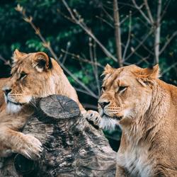 Leeuwen ARTIS