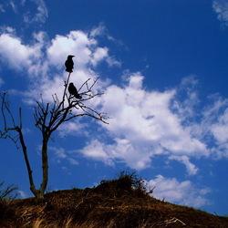 The Birds -03
