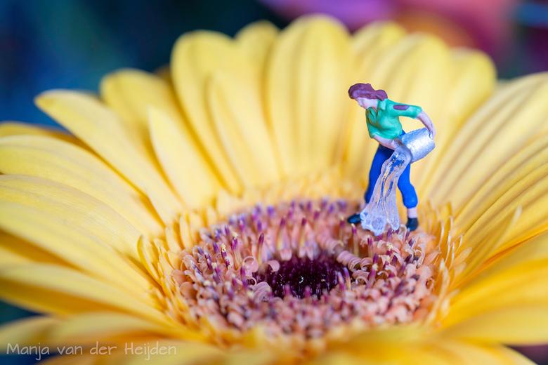 water geven - Toch maar even de bloemen wat water geven.....