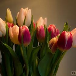 Tulpen in vaas.