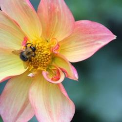 Bumblebeebzzzz