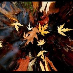 explosie van herfstkleuren..