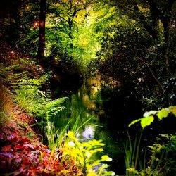 nature is pretty