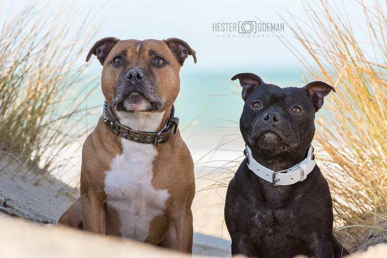 Beach dogs...