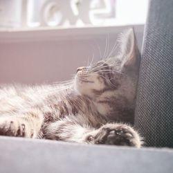 Lazy Pip