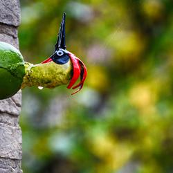 Een vreemde vogel