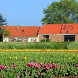 De tulp. Sinds 1820.
