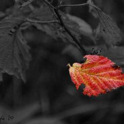 herfst in aantocht...