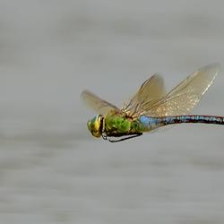 Keizerlibel