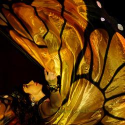 De vlinder dans