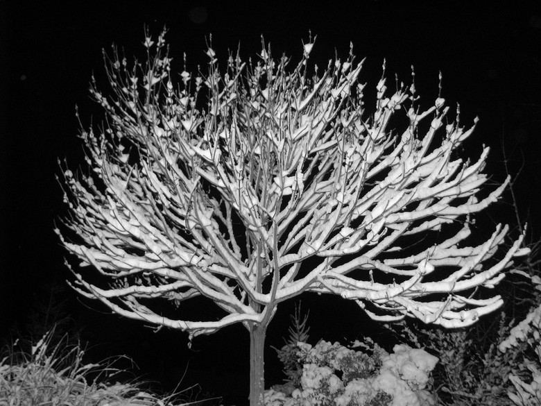 Snow-Tree by Night - Mooie zwart-Wit foto in de nacht