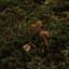padestoelen tussen het mos