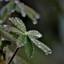 blad met dauw