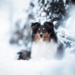 Skye in de sneeuw