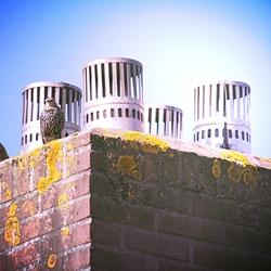 Genieten op de schoorsteen
