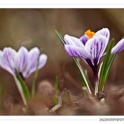 Het echte lentegevoel! (3)