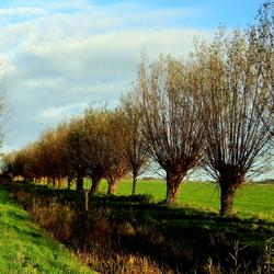 Landschap Knotwilgen